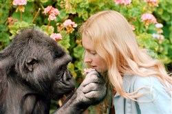 "Koko with her caretaker Penny Patterson in the documentary ""Koko: The Gorilla Who Talks."""