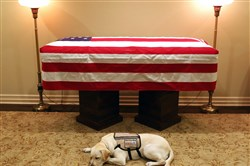 Sully, the service dog of former President George H.W. Bush, lies next to his coffin in Houston on Dec. 2.