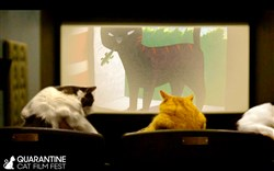 Your cat videos can compete for prizes and the chance to be in a full-length film, to benefit independent movie theaters such as Row House Cinema in Lawrenceville.